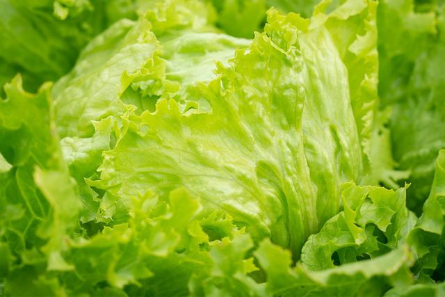 0306-lettuce