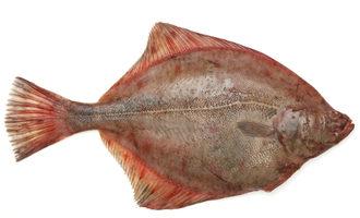 1125   flat fish1