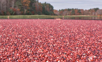 Oceanspraycranberries_lead