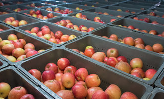 Appleswarehouse_lead