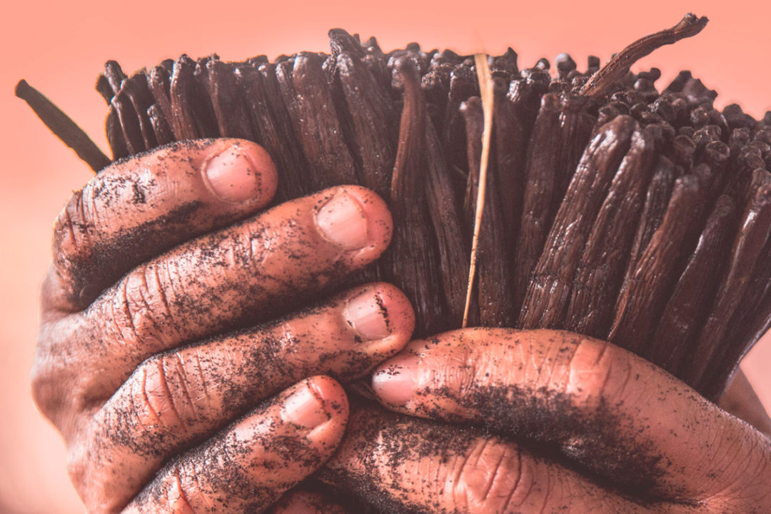 Kerry Group sustainably harvested vanilla