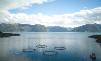 Seafoodblockchain lead
