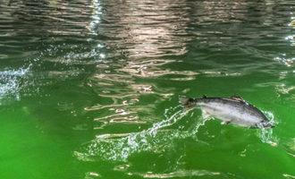 0511   bluewater salmon
