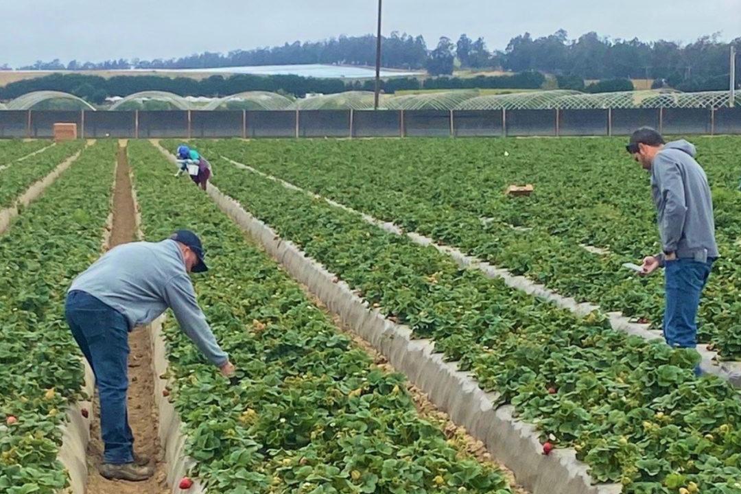 0512_-_bobalu_farms.jpg