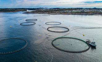 1006   fisheries