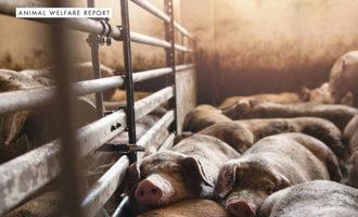 Animal-welfare-smaller