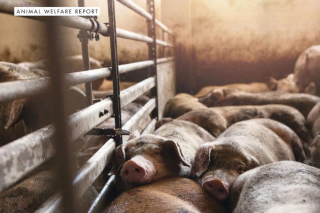 Animal Welfare report
