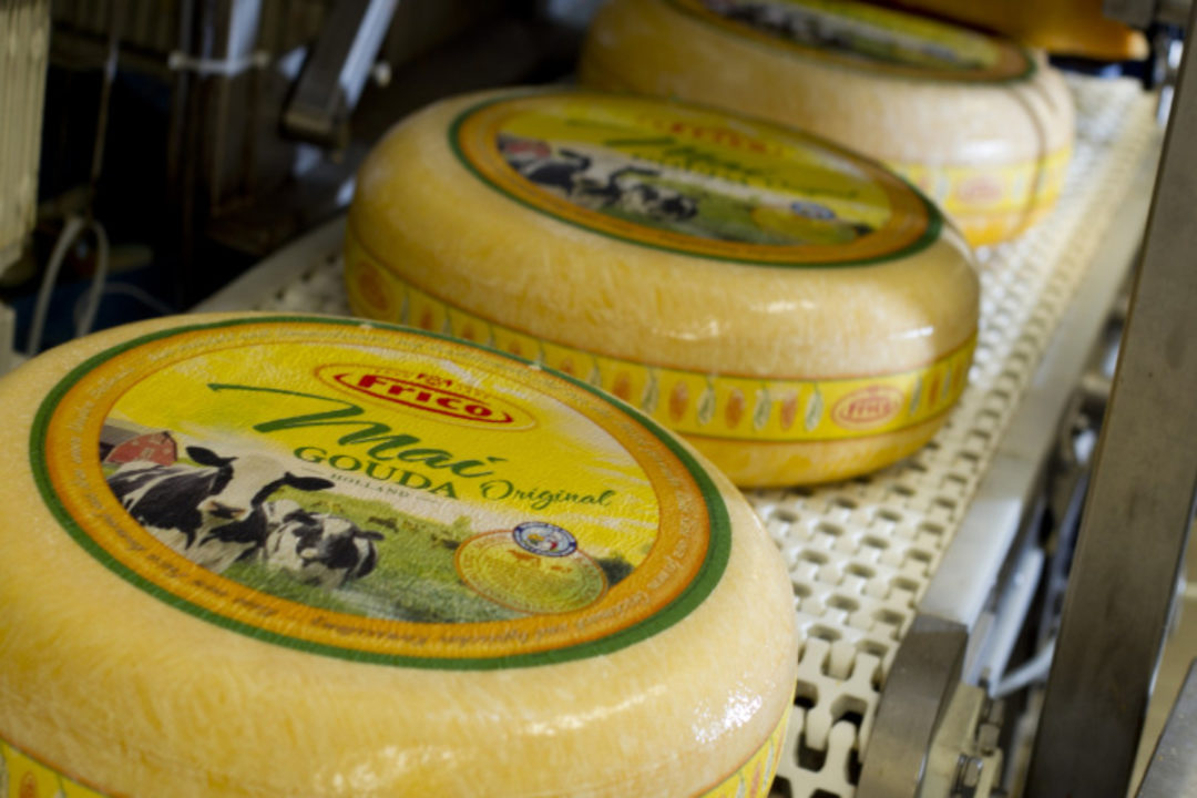 friesland campina cheese sp