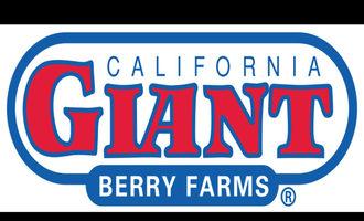 Cal-giant-logo-sp