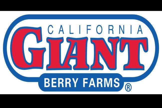 cal giant logo sp